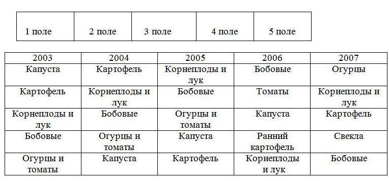 В 2007 году - томаты Участок